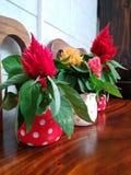 Potenciômetros de flor da tabela Fotografia de Stock Royalty Free
