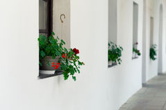 Potenciômetros de flor das flores nas janelas Fotos de Stock Royalty Free