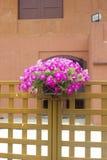 Potenciômetros de flor de suspensão. Imagens de Stock Royalty Free