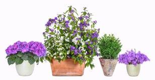 Potenciômetros de flor diferentes imagem de stock royalty free