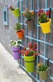 Potenciômetros de flor na parede Foto de Stock Royalty Free