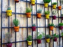Potenciômetros de flor na parede de madeira Imagens de Stock Royalty Free