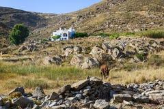 Potenciômetros de flor - Paros, Greece Fotos de Stock