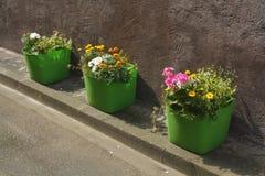 Potenciômetros de flor verdes Foto de Stock Royalty Free