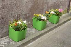 Potenciômetros de flor verdes Fotografia de Stock