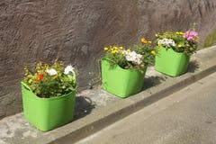 Potenciômetros de flor verdes Fotos de Stock Royalty Free