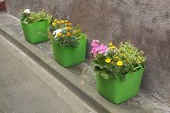 Potenciômetros de flor verdes Imagens de Stock Royalty Free