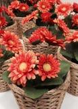 Potenciômetros de flores Fotos de Stock