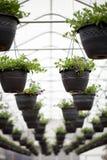 Potenciômetros de flores de suspensão do berçário Foto de Stock Royalty Free