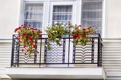 Potenciômetros de flores do gerânio em um balcão fotos de stock royalty free