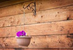 Potenciômetros de suspensão com as flores no fundo de madeira, exterior Imagens de Stock Royalty Free