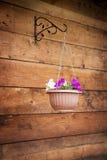 Potenciômetros de suspensão com as flores no fundo de madeira, exterior Fotografia de Stock
