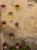 Potenciômetros do papel de parede das flores Imagens de Stock