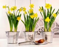 Potenciômetros dos narcisos amarelos na tabela Fotos de Stock