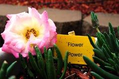 Potencia de flor Foto de archivo