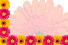 Potencia de flor Imagenes de archivo