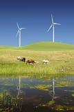 Potencia que genera los molinoes de viento y el ganado Foto de archivo