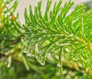 Potencia verde Imagen de archivo libre de regalías