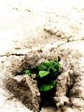 Potencia verde de una planta del potatoe Imagenes de archivo