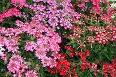 Potencia y conectividad de flor Foto de archivo libre de regalías