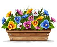 Potenciômetro de flor de madeira com pansies Foto de Stock Royalty Free