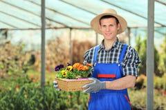 Potenciômetros de flor masculinos da terra arrendada do jardineiro Imagem de Stock