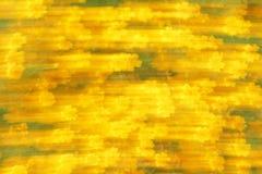 Potentillas που θολώνονται κίτρινα Στοκ φωτογραφίες με δικαίωμα ελεύθερης χρήσης