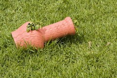 Potenziometer im Gras Stockfotos