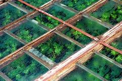 Potenziometerpflanzen Lizenzfreies Stockfoto