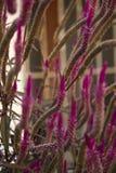 Potere dei fiori Immagini Stock