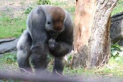 Potere della gorilla immagine stock libera da diritti
