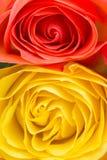 Potere della rosa di giallo e dell'arancia Immagini Stock Libere da Diritti