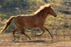Potere di cavallo Fotografie Stock
