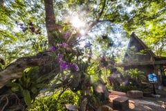Potere di Sun Fotografia Stock