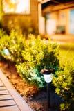 Potere di Viola Flowerbed Illuminated Energy-Saving Solar di vista di notte Fotografia Stock