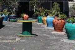 Potes coloreados con las plantas Foto de archivo