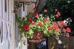 Potes con el geranio del rojo de las flores Imágenes de archivo libres de regalías