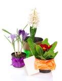 Potes con las flores, adornadas por la tarjeta de la cinta Imagen de archivo libre de regalías