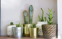 Potes con los pequeños cactus Plantas suculentas Foto de archivo