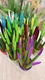 Potes con los pequeños cactus Plantas suculentas Imagen de archivo libre de regalías