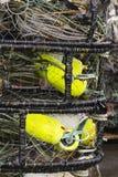 Potes de cangrejo Imágenes de archivo libres de regalías