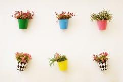 Potes de flores coloridos Foto de archivo libre de regalías