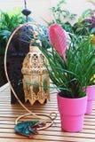 Potes de flores exóticos Foto de archivo libre de regalías