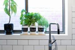 Potes de hierbas en travesaño contemporáneo de la ventana de la cocina Fotografía de archivo libre de regalías