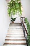 Potes de la planta adornados en jardín de la escalera Foto de archivo libre de regalías