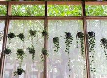 Potes de la planta adornados en jardín de la escalera Imagen de archivo