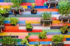 Potes de las hierbas de la planta que cuelgan en la pared Imagenes de archivo