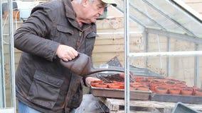 Potes de riego del hombre mayor en un invernadero almacen de video