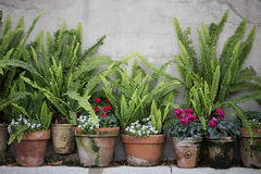 Potes del jardín con los helechos imágenes de archivo libres de regalías