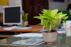 Pothos sur le travail de bureau dans le bureau Photographie stock